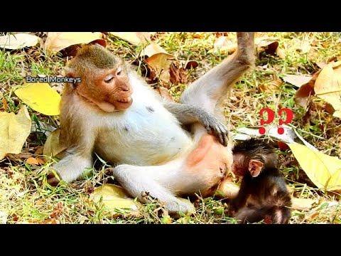 OMG!Baby Duke wonder why mom Duchess do abnormal like this,What Duchess try talk to Duke