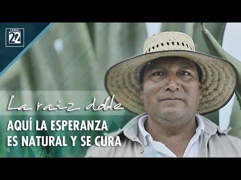 La raíz doble. Aquí la esperanza es natural y se cura: pulque y tlachiqueros, Hidalgo-Cd. de México.