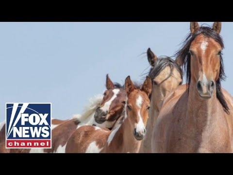 Biden administration program sending horses to slaughter
