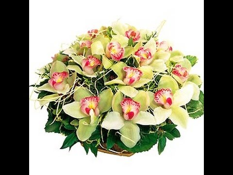 Цветы орхидеи фото букетов