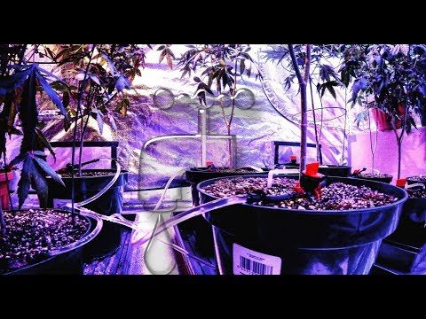 Small irrigation system for the indoor home grower