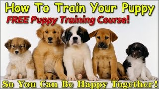 ★★★★ The Best Way To Train A Puppy { GET IT NOW! } FREE Puppy Training Course +++