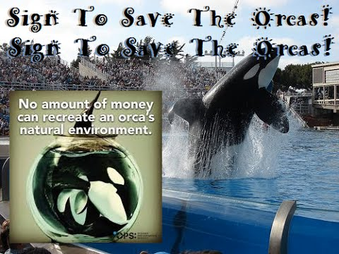 Let's Save The Orcas Together!