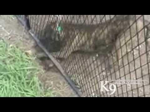 K9 Kennel Digging Prevention System 1 877 527 3455 Youtube