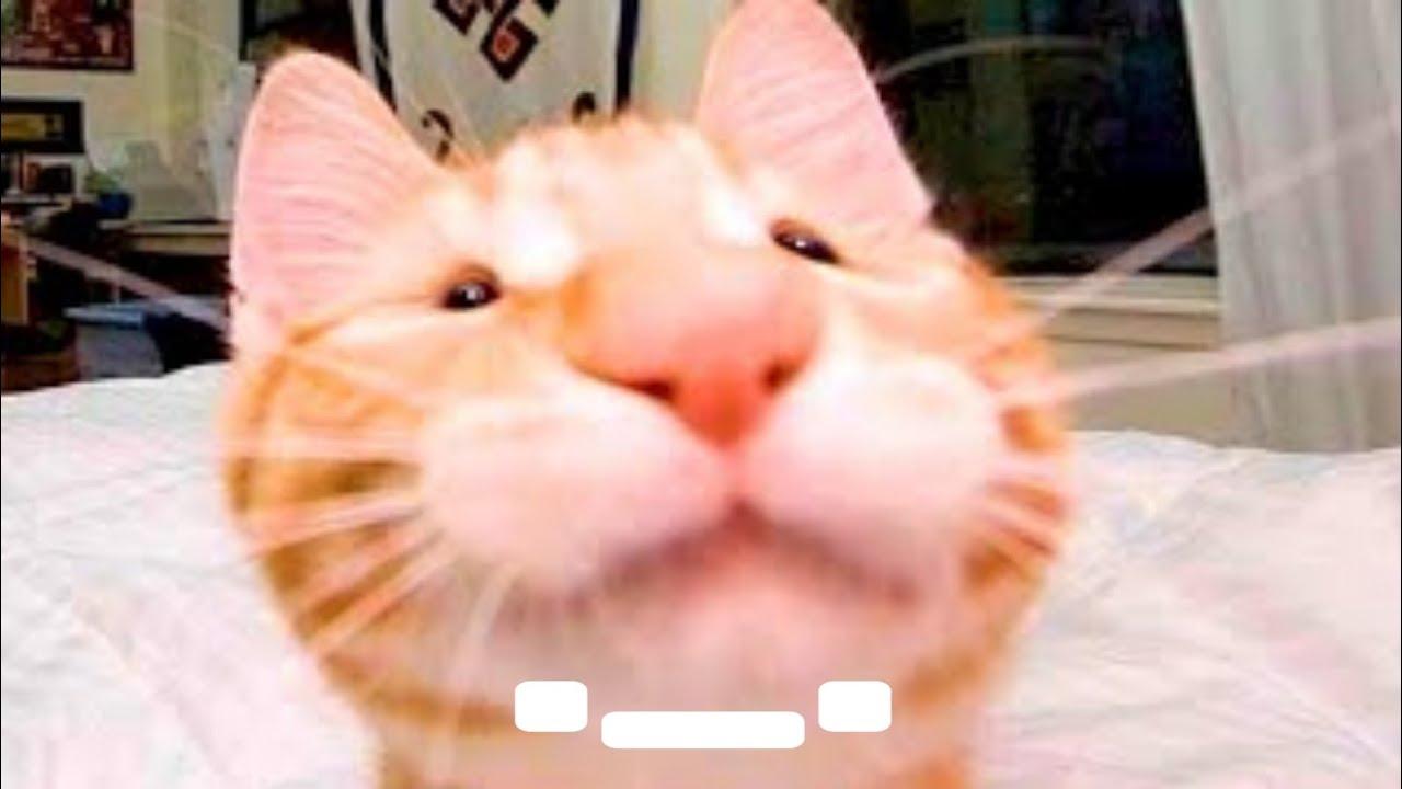 🥺 LLORARÁS de la RISA con Animales Chistosos 🐱🐶 Compilación de Videos de Mascotas