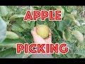 Weekend Vlog 132 - Apple Picking, Surprise for Brandon