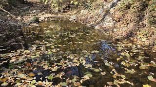 Осень на меленькой горной реке