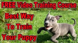 How To Train A Puppy  ☺ FREE VIDEO COURSE ☺ Best Way To Train A Puppy ♥ ♥ ♥ ♥