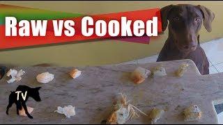 Raw vs Cooked Shrimp Taste Test   Raw Feeding Vlog