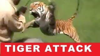 TIGER ATTACKS MAN ON ELEPHANT