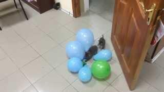Котики и шарики.  Часть 1