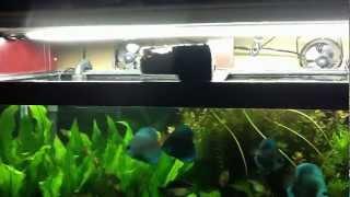 Eheim Everyday Fish Feeder In Action Youtube