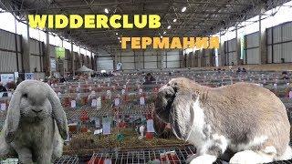 Обзор выставки кроликов породы Баран в Германии