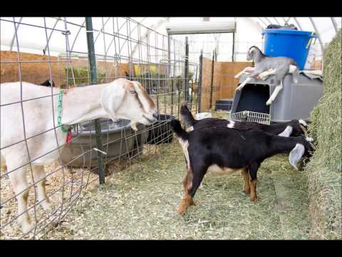 Barns and Alternatives for your homestead March 9, 2015