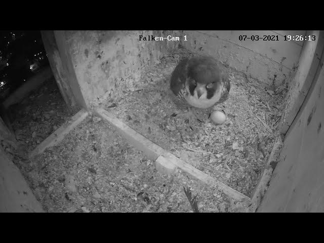 Highlights vom 7.3. - das erste Ei