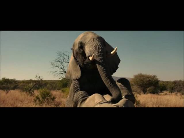 The Brothers Grimsby   elephant scene