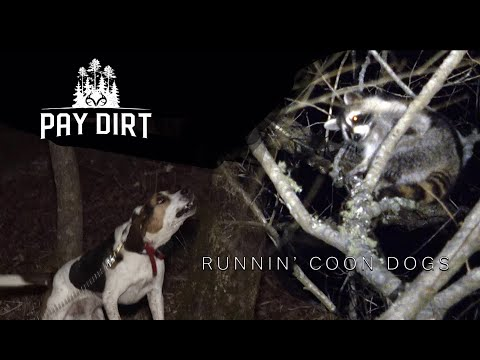 How To: Hunting Coons With Dogs