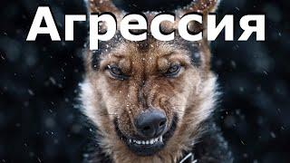 Агрессия к хозяевам. Собака рычит на хозяина, доминирование / Dog Aggression Toward Its Owners