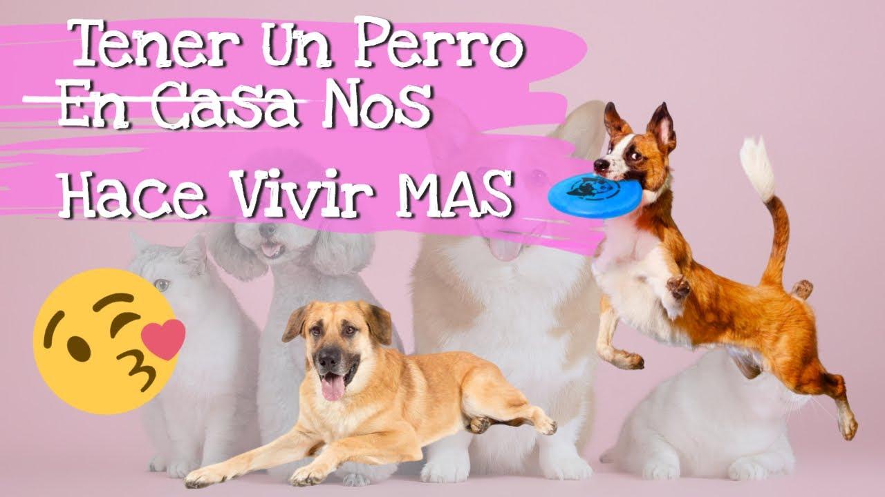 Tener Un Perro En Casa Podría Hacernos Vivir Mas ( Y Más Felices)