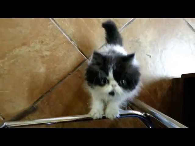 gato miando TRAVEL_VIDEO