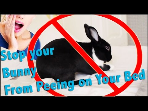 How to Stop your Bunny from Peeing on Your Bed