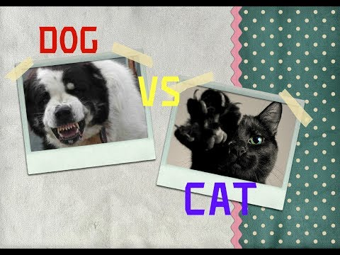 CAT VS DOG of Alabai breed.VIEW ALL!!!