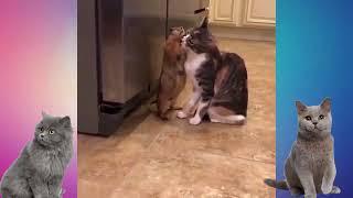 Приколы с кошками сборник » Видео для ватсапа скачать бесплатно
