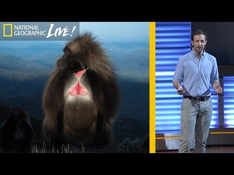 National Geographic Live! - The Fascinating Lives of Bleeding Heart Monkeys (Part 1) | Nat Geo Live