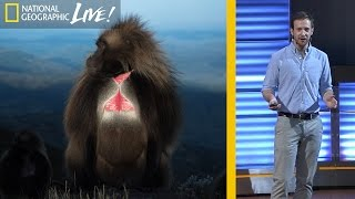 National Geographic Live!   The Fascinating Lives of Bleeding Heart Monkeys (Part 1) | Nat Geo Live