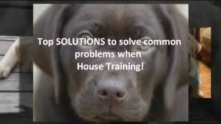 Popular Styles For House Training A Labrador Retriever