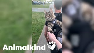 Fig the cat gives hiking two thumbs up   Animalkind