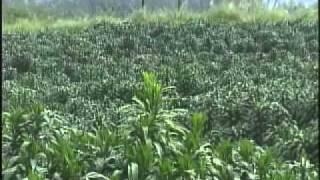California & Hawaii Foliage Growers INC