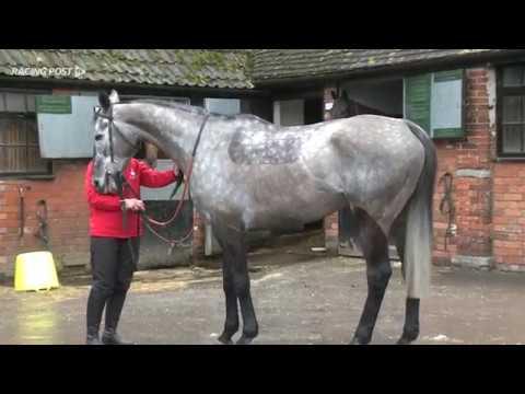 Paul Nicholls: Cheltenham chasers 2017