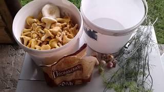 Солим грибы лисички и грузди по деревенски, самый вкусный рецепт.