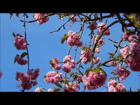 Beethoven Sonata No  12 in A Flat Major, Op  26   II  Scherzo Allegro molto
