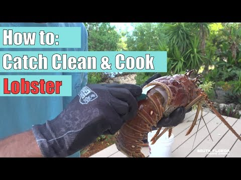 How to: Catch Clean and Cook Lobster