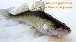 Зимняя, любительская рыбалка на Камском Устье
