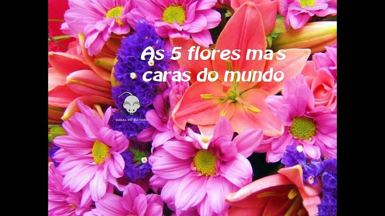 As 5 flores mais caras do mundo   #420E82 1024x768
