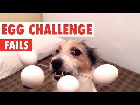 Dog Egg Challenge Fails