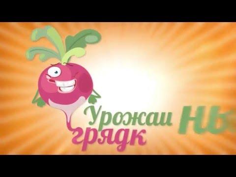Характеристика сортов картофеля: Невский, Любава, Тулеевский, Кунезчанка, Танай, Кемеровчанин.