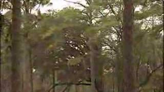 Miss United States National Forestry Commercial 2007