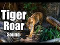 10 Minutes - Tiger Roar Sound Effects - different Tiger Roar sounds * HIGH QUALITY *