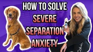 SEVERE SEPARATION ANXIETY? LEARN ABOUT HOW CBD OIL FOR DOGS CAN HELP