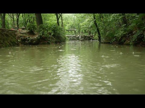 연못에 내리는 빗소리 8시간 raining sounds in the pond