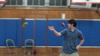 Parrots Free Fly In Very Large Gym