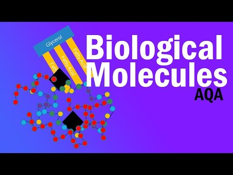 BIOLOGICAL MOLECULES ~ Detailed AQA A-level Revision