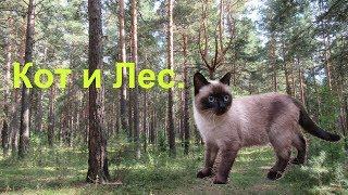 Лесные впечатления. Кошачьи удивления.