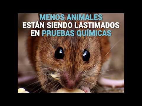PETA presionó al EPA para reducir los experimentos en animales, ¡y lo logró!