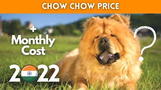 Chow Chow Dog Price in India 2021 (Monthly Expenses Included)