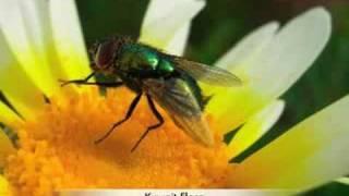 Kuwait Flora Thumbnail